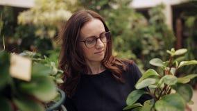 De vrouw in bloemwinkel selecteert de bloemruimte in de pot stock footage