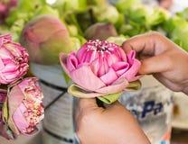 De vrouw die bloemblaadje roze lotusbloem vouwen voor bidt Boedha in Thai Royalty-vrije Stock Afbeeldingen