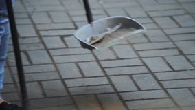 De vrouw die jeans dragen veegt weg puin van witte vloer in blik in straat stock footage