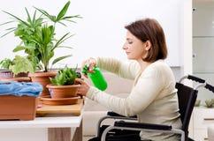 De vrouw die in rolstoel houseplants cultiveren royalty-vrije stock afbeeldingen