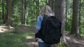 De vrouw die van de blondewandelaar met rugzak op weg van het hout van de bergsleep lopen - stock video