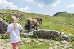 De vrouw drijft haar bergpaarden bij Eho-hut De paarden dienen om levering van en aan de hut te vervoeren stock afbeelding