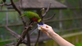 De vrouw in een vogelpark voedt binnen een groene papegaai met een melk stock videobeelden