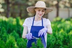 De vrouw gebruikt het tuinieren hulpmiddel om haag, scherpe struiken met tuinscharen in orde te maken stock foto's
