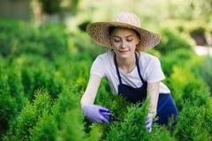 De vrouw gebruikt het tuinieren hulpmiddel om haag, scherpe struiken met tuinscharen in orde te maken royalty-vrije stock afbeelding