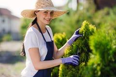 De vrouw gebruikt het tuinieren hulpmiddel om haag, scherpe struiken met tuinscharen in orde te maken royalty-vrije stock afbeeldingen