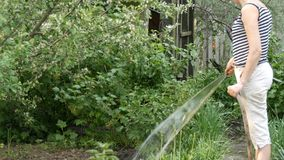De vrouw geeft installaties in haar tuin van een slang water stock footage