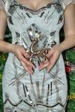 De vrouw is gekleed in een slimme kleding houdend een hert Vrouwelijke handen stock fotografie