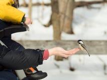 Vrouw die een vogel voeden royalty-vrije stock foto's