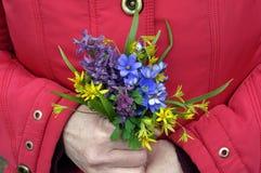De vrouw houdt de eerste de lentebloemen Stock Fotografie