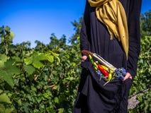 De vrouw houdt in haar handen de oogst van groenten royalty-vrije stock foto