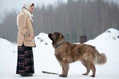 De vrouw leidt Kaukasische Herder en yardhond op een sneeuwgrond in het park op royalty-vrije stock fotografie