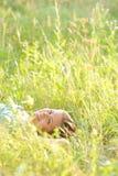 De vrouw ligt in het park Stock Foto