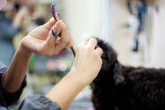 De vrouw maakt een hond schoon royalty-vrije stock afbeeldingen
