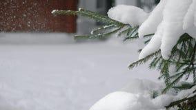 De vrouw mept een tak met sneeuw op het stock videobeelden