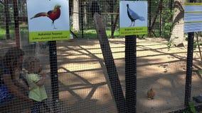 De vrouw met dochter geniet van bij exotische vogels in dierentuinkooi stock videobeelden