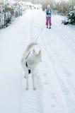 De vrouw met een hond in de winter royalty-vrije stock foto's