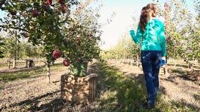 De vrouw onderzoekt appelboomgaard stock videobeelden