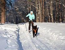 De vrouw op ski gaat voor een lopende hond. Royalty-vrije Stock Afbeeldingen
