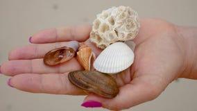 De vrouw in de Palm van Uw Hand houdt de Shells Close-up op een Achtergrond van Zand stock videobeelden