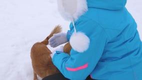De vrouw petting rode honden op witte sneeuw Huisdieren met gastheer op de wintergang Huisdieren met nakomelingen stock footage