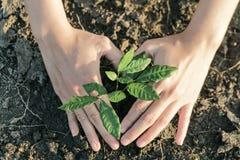 De vrouw plantte een boom op een door de droogte geteisterd land stock afbeelding
