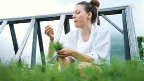 De vrouw plukt dille en eet van het tuinclose-up in de de zomertuin stock video