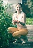 De vrouw plukt van tomaat i royalty-vrije stock foto