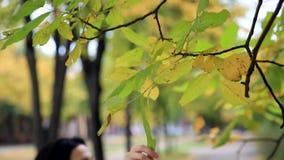 De vrouw raakt de groene bladeren stock footage