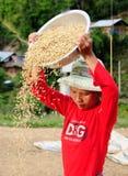 De vrouw scheidt goede rijstzaden stock afbeelding