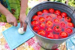 De vrouw snijdt mierikswortel voor behoud van tomaten Stock Foto