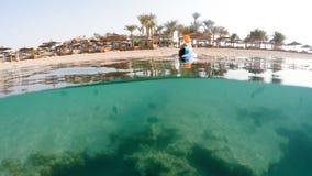 De vrouw snorkelt zwemt in ondiep water met koraalvissen, Rode Overzees, Egypte stock video