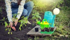 De vrouw in de tuin maakt het planten van zaden Meisje dat zaailing plant stock foto