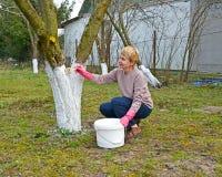 De vrouw van gemiddelde jaren bleekt een boomstam van een fruitboom De de lentewerken in een tuin royalty-vrije stock afbeelding