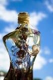 De vrouw van het glas met bloemen Stock Foto