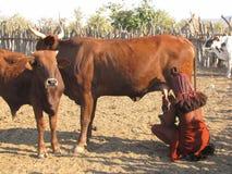 De vrouw van Himba Royalty-vrije Stock Foto's