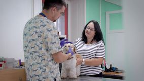De vrouw van de hondeigenaar is in benoeming met dierenarts in een kliniek, voert de mannelijke arts een algemeen medisch onderzo stock footage