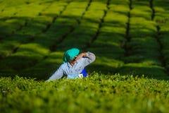 De vrouw van de theeplukker verzamelt bladeren bij aanplanting amond groene struiken 20 februari 2018 Munnar, India Royalty-vrije Stock Afbeeldingen
