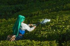 De vrouw van de theeplukker verzamelt bladeren bij aanplanting amond groene struiken 20 februari 2018 Munnar, India Royalty-vrije Stock Afbeelding