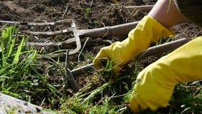De vrouw verwijdert onkruid uit de tuin, omhoog sluit stock footage