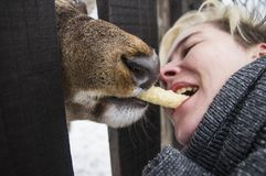 De vrouw voedt een hert door de omheining royalty-vrije stock foto's