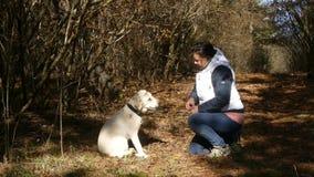 De vrouw voedt hond met handen stock footage