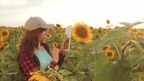 De vrouwelijke agronoom bestudeert het bloeien van een zonnebloem onderneemster die op gebied hun inkomen plannen Landbouwer Girl stock video