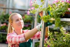 De vrouwelijke arbeider van het tuincentrum met ingemaakte bloemen Stock Afbeelding