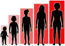 De vrouwelijke groei vector illustratie