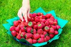 De vrouwelijke hand bereikt aan een schotel van aardbeien die zich op gr. bevinden Stock Foto's