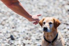 De vrouwelijke hand geeft bevel aan een hond royalty-vrije stock foto's