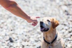 De vrouwelijke hand geeft bevel aan een hond royalty-vrije stock afbeeldingen