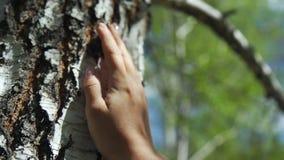 De vrouwelijke hand raakt de berkboom - een zwart-witte boom stock videobeelden