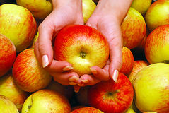 De vrouwelijke Holding Apple van Handen Stock Afbeelding